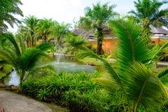 Primer de las hojas de palma contra la fuente en el lago foto de archivo