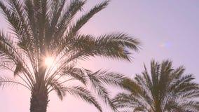 Primer de las hojas de palma en la puesta del sol metrajes