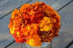 Primer de las maravillas rojas del amarillo anaranjado Foto de archivo libre de regalías