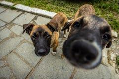 Primer de las marionetas del perro de Brown Imágenes de archivo libres de regalías