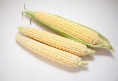 Primer de las mazorcas de maíz fotos de archivo