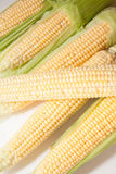 Primer de las mazorcas de maíz imagen de archivo