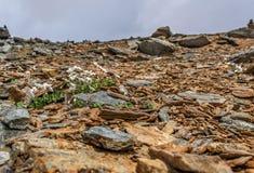Primer de las montañas de las piedras de las flores blancas Fotos de archivo libres de regalías