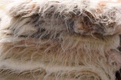 Primer de las ovejas procesadas de las lanas Imagenes de archivo