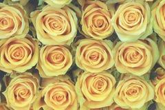 Primer de las rosas amarillas fotos de archivo libres de regalías