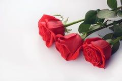 Primer de las rosas rojas aislado en un fondo blanco Imagenes de archivo