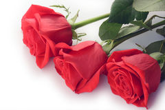 Primer de las rosas rojas aislado en un fondo blanco Foto de archivo