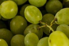 Primer de las uvas blancas Fotos de archivo