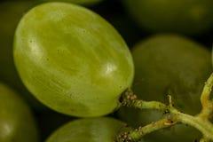 Primer de las uvas blancas Fotos de archivo libres de regalías