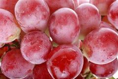 Primer de las uvas rojas Foto de archivo libre de regalías
