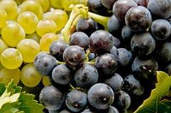Primer de las uvas variadas Fotografía de archivo libre de regalías