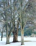 Primer de los árboles del invierno Foto de archivo