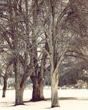 Primer de los árboles del invierno Fotografía de archivo