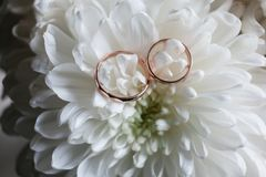 Primer de los anillos de bodas en el crisantemo blanco Fotos de archivo libres de regalías