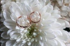 Primer de los anillos de bodas en el crisantemo blanco Crisantemos y el anillo de bodas Imagen de archivo