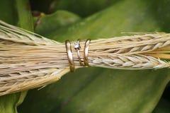 Primer de los anillos de bodas en los oídos del trigo fotografía de archivo libre de regalías