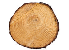 Primer de los anillos de árbol aislado en el fondo blanco fotos de archivo libres de regalías