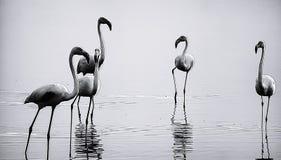 Primer de los animales del pájaro al aire libre Imagen de archivo