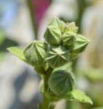 Primer de los brotes de flor en jardín fotos de archivo