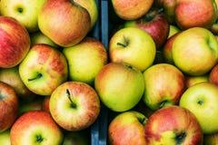 Primer de los cajones de manzanas frescas, ecológicamente producidas jugosas, Foto de archivo