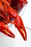 Primer de los cangrejos Fotografía de archivo libre de regalías