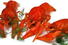 Primer de los cangrejos Imagen de archivo libre de regalías