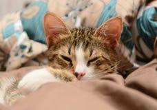 Primer de los gatos Fotografía de archivo