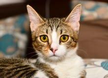 Primer de los gatos Fotos de archivo