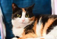 Primer de los gatos Fotografía de archivo libre de regalías