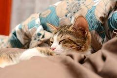 Primer de los gatos Foto de archivo libre de regalías