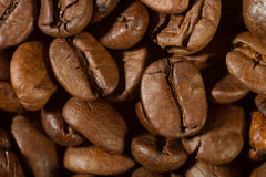 Primer de los granos de café con el foco en uno Foto de archivo libre de regalías