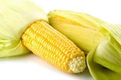 Primer de los granos frescos del maíz aislados Imágenes de archivo libres de regalías