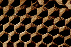 Primer de los hexágonos de la jerarquía de la avispa foto de archivo