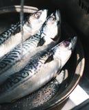 Primer de los pescados de Saba en cacerola Imagenes de archivo