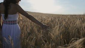 Primer de los tallos conmovedores de la mano de la hierba salvaje Mujer joven en el vestido de sol blanco que camina a través de  almacen de video