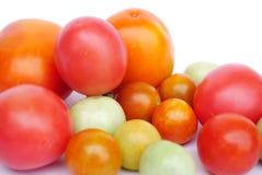 Primer de los tomates aislados en un fondo blanco Foto de archivo libre de regalías