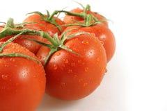 Primer de los tomates de la vid Fotografía de archivo