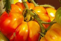 Primer de los tomates grandes del filete Fotografía de archivo