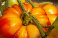 Primer de los tomates grandes del filete Imagenes de archivo