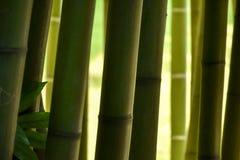 Primer de los troncos de bambú en un bosque de bambú, con tonalidades agradables de g Fotografía de archivo