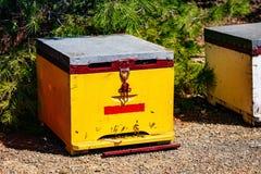 Primer de madera amarillo de la colmena de la abeja en verano Fotografía de archivo libre de regalías
