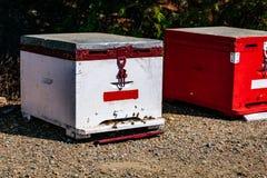 Primer de madera blanco de la colmena de la abeja en verano Foto de archivo