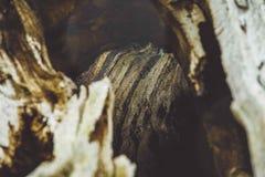 Primer de madera del árbol de la textura fotografía de archivo libre de regalías