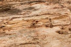 Primer de madera 7 del fondo de la textura Foto de archivo libre de regalías