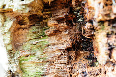 Primer de madera del fondo de la textura de la madera muerta vieja que se mancha y se marca con hoyos con una superficie texturiz Foto de archivo libre de regalías