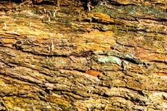 Primer de madera del fondo de la textura de la madera muerta vieja que se mancha y se marca con hoyos con una superficie texturiz Imágenes de archivo libres de regalías