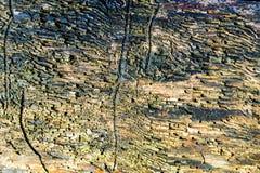Primer de madera del fondo de la textura de la madera muerta vieja que se mancha y se marca con hoyos con una superficie texturiz Foto de archivo