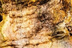 Primer de madera del fondo de la textura de la madera muerta vieja que se mancha y se marca con hoyos con una superficie texturiz Fotografía de archivo libre de regalías