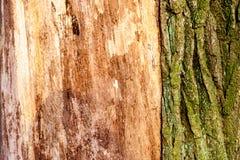 Primer de madera del fondo de la textura de la madera muerta vieja que se mancha y se marca con hoyos con una superficie texturiz Imagen de archivo libre de regalías