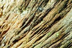 Primer de madera del fondo de la textura de la madera muerta vieja que se mancha y se marca con hoyos con una superficie texturiz Imagen de archivo
